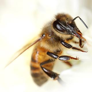 https://endangeredwild.life/wp-content/uploads/2020/03/biodiversity-project-bee-2.jpg