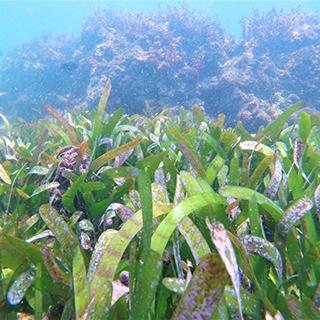https://endangeredwild.life/wp-content/uploads/2020/08/biodiversity-project-seagrass.jpg