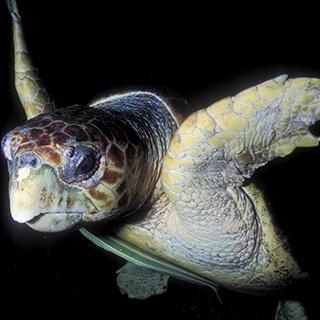 https://endangeredwild.life/wp-content/uploads/2021/01/4_small_box_turtle.jpg
