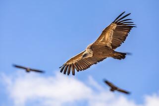 https://endangeredwild.life/wp-content/uploads/2021/01/efc-section-3-left-business-vulture.jpg