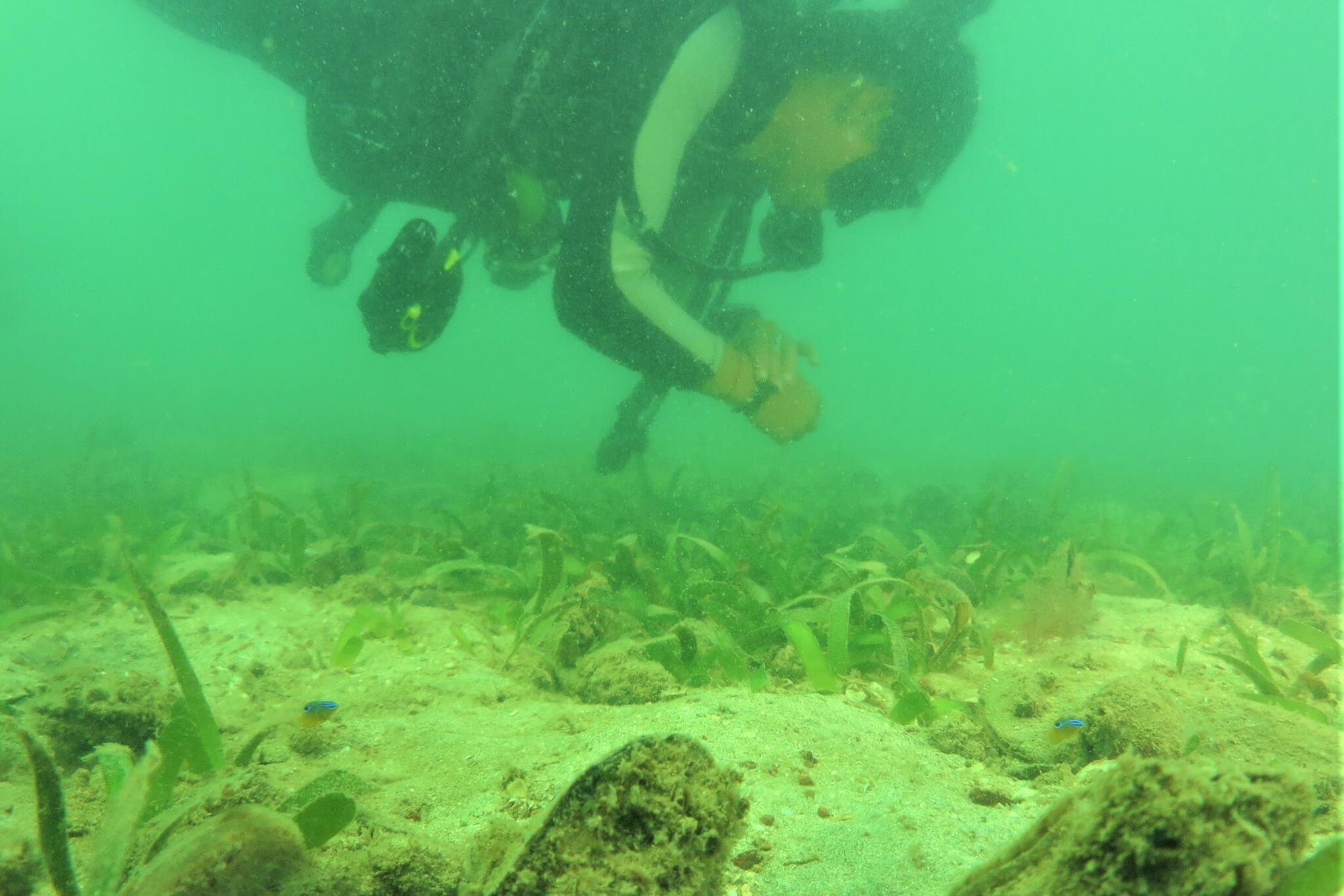 Seagrass 2