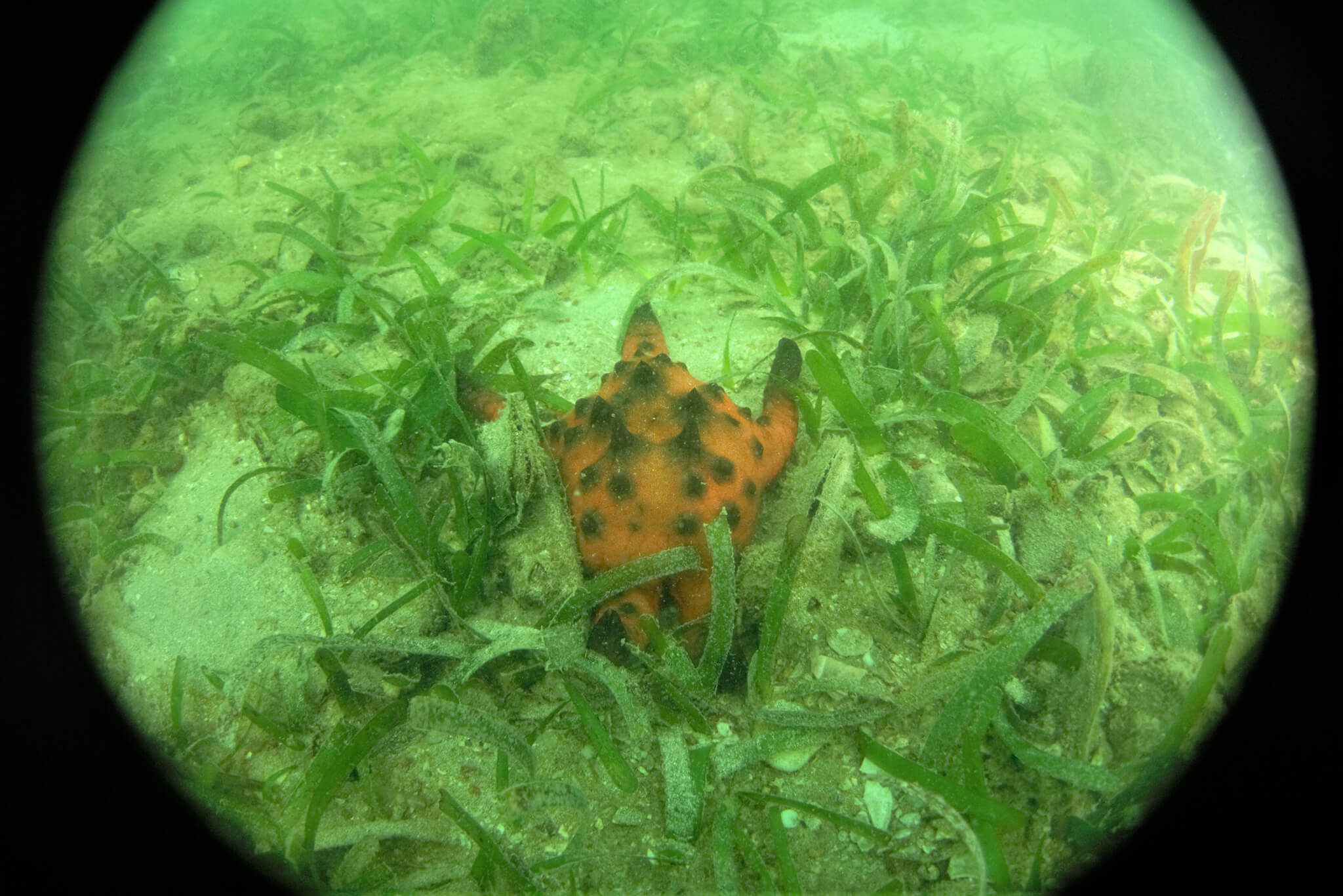 Seagrass 3