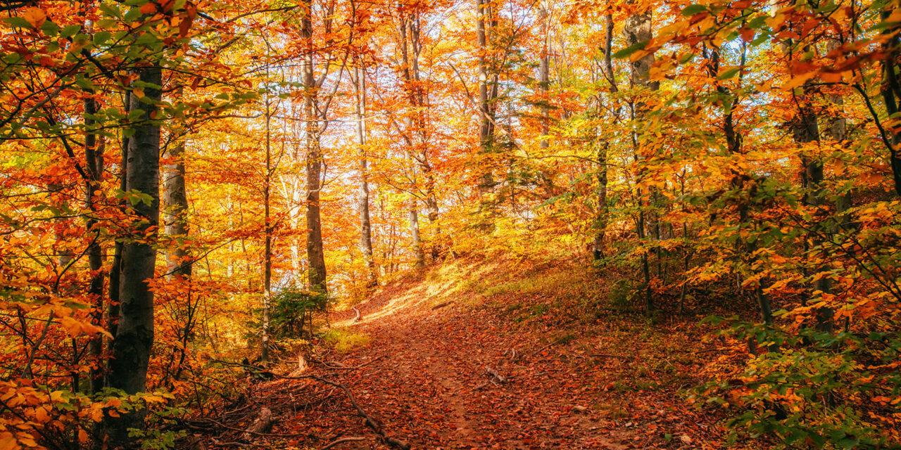 https://endangeredwild.life/wp-content/uploads/2021/05/forest-road-in-the-autumn-landscape-ukraine-europe-small-1280x640.jpg