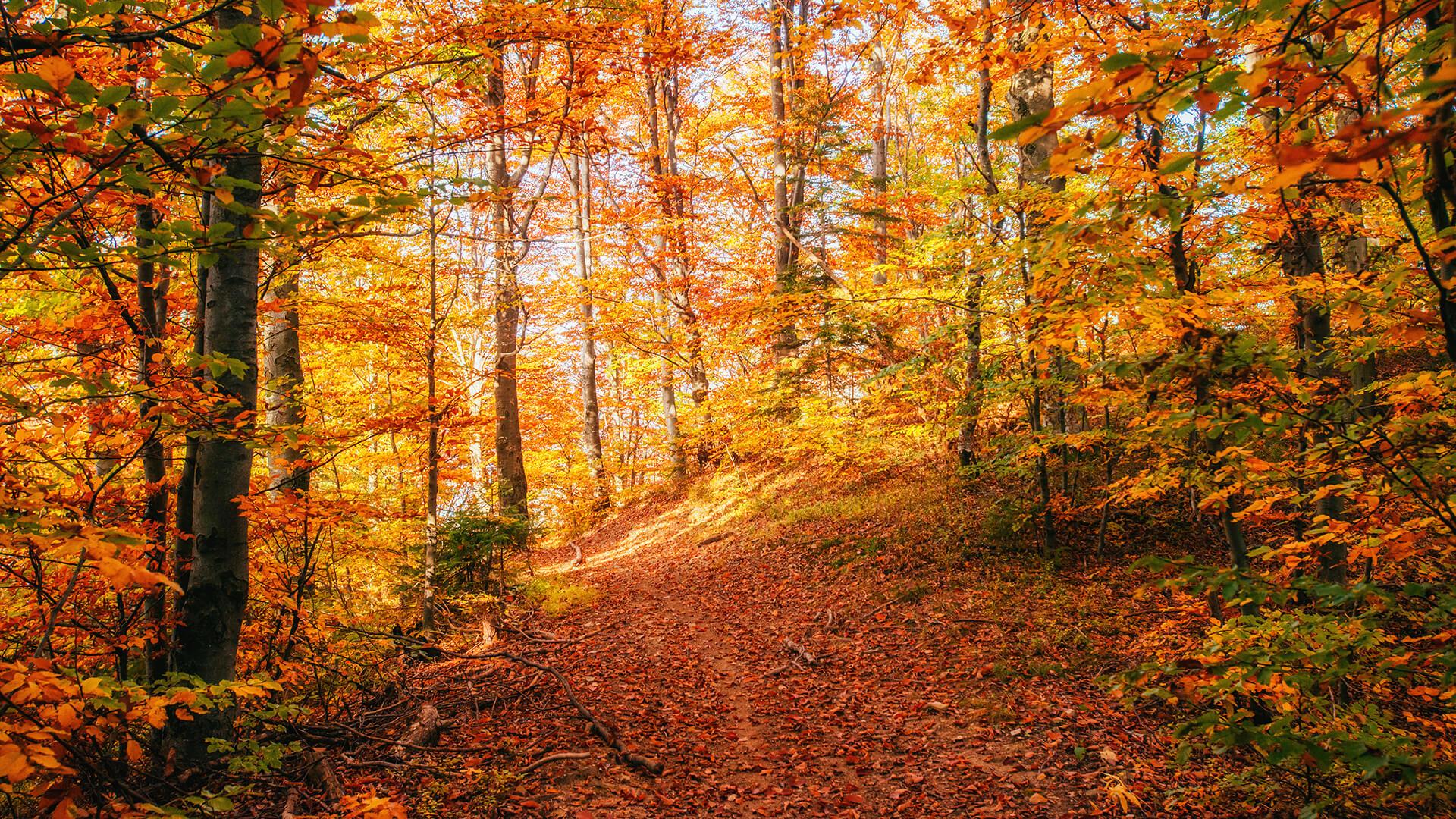 https://endangeredwild.life/wp-content/uploads/2021/05/forest-road-in-the-autumn-landscape-ukraine-europe-small.jpg